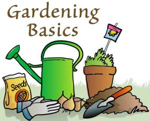 gardening_basics